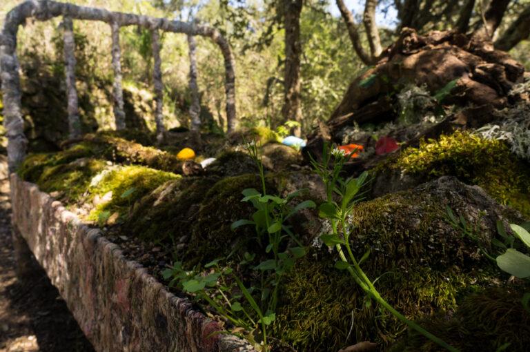 El Camino de los Prodigios (Sierra de Francia)