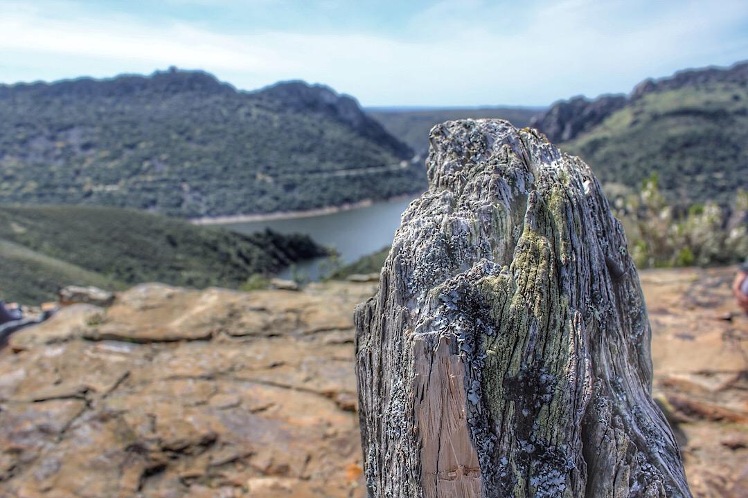 Ruta Monfragüe - tronco