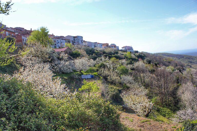 Ruta Robledal de la Solana en Barrado (Valle del Jerte)