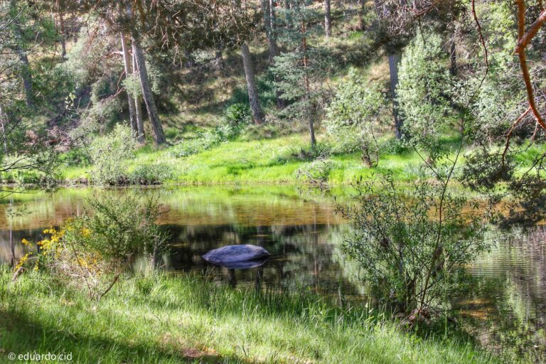 Ruta Hoyos del Espino – Las Chorreras del Tormes (Gredos, Ávila)