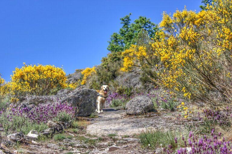 Ruta de los Molinos y yacimiento visigodo de La Legoriza (San Martín del Castañar)