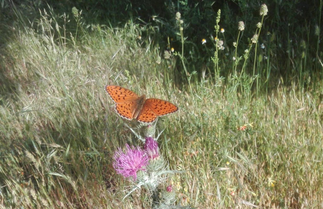 Mariposa en el bosque de robles