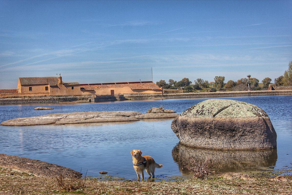 Perro en un lago