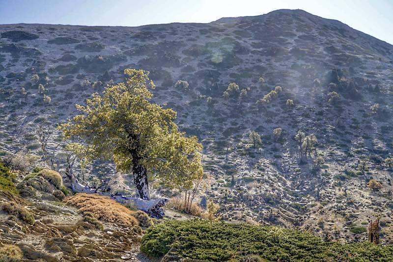 Hiking Serranía de Ronda