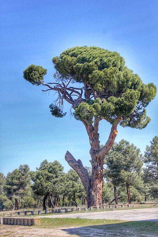 Trekking Segovia