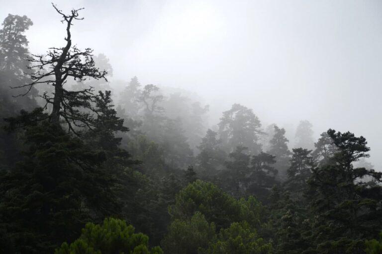 Los Reales de Sierra Bermeja (Genalguacil, Málaga)