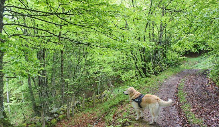 Ruta de Arcenorio y Bosque de Peloño (Concejo de Ponga, Asturias)